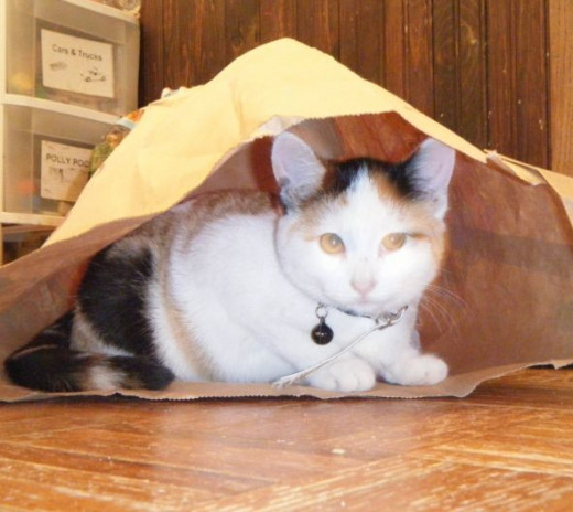Patches when she was a kitten.  Bags have been her favorite ever since she was a baby.