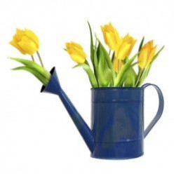 Great Ideas For Mothers Day