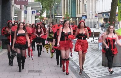 The march of the lady bugs