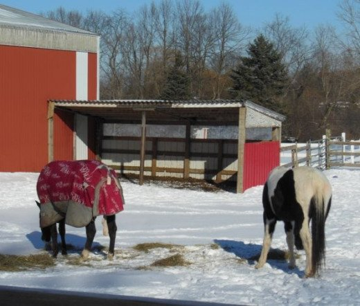 Horses eating their hay during the winter months