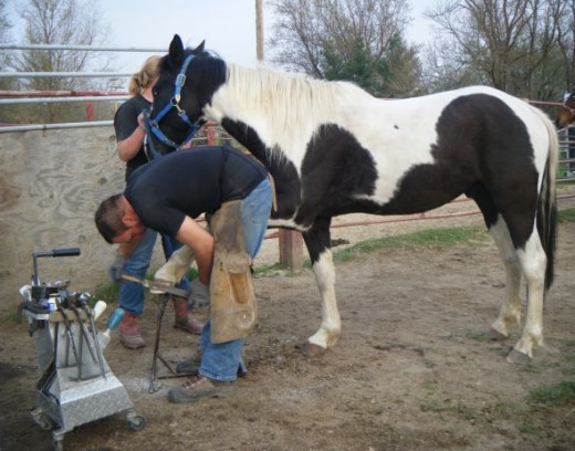 The horse farrier comes every 6-8 weeks