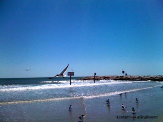 Birds are fellow travelers at Galveston beach (copyright 2010 Vikk Simmons)