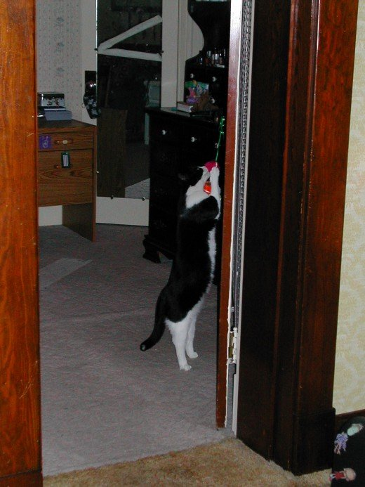 Playing with a toy hanging from the door knob.