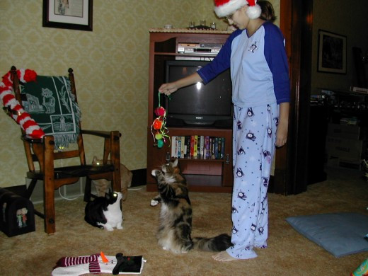 A young Nellie.  Christmas, 2002.