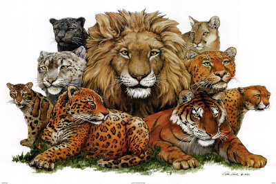 """Great Cats"" is available in a range of sizes and formats at"