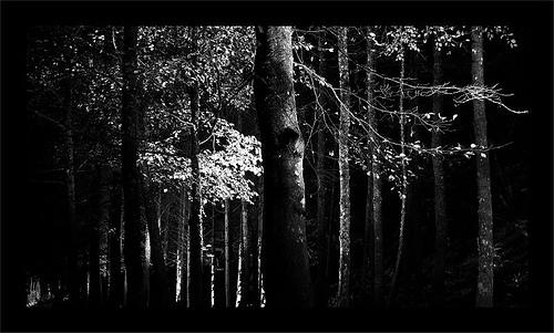 Light in the Dark B&W