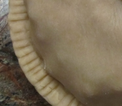 Pie crust edge crimped with fork tines