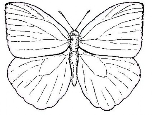 realistic butterflies coloring pages - photo#12