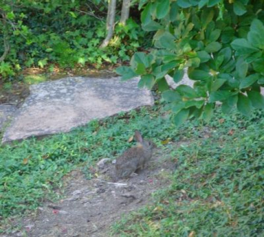This little brown rabbit camouflaged itself in the garden