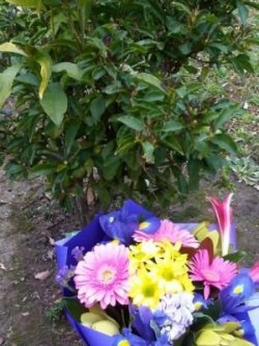 Mom's memorial tree