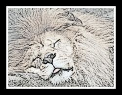 pencil sleeping lion