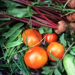 9 Reasons For Growing Your Own Vegetables
