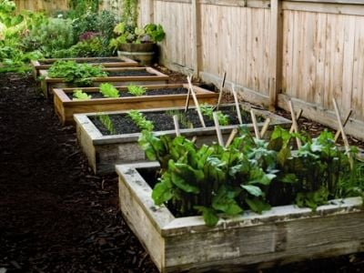 Raised Beds Gardening
