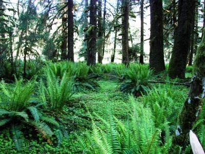 Lush Ferns And Greenery