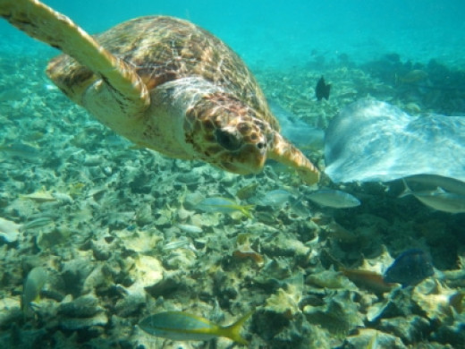 Shot in Belize with an Nikon Coolpix AW100 Waterproof Camera