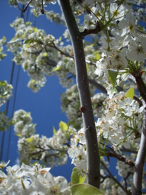 Ladybug Climbing Branch of Flowering Tree