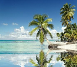 Beautiful tropical beach with palm trees