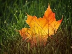 Fall Pictures: For Autumn Splendor Year Round
