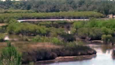 Marshland at Parc Ornithologique du Teich