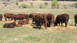 Some of the cows