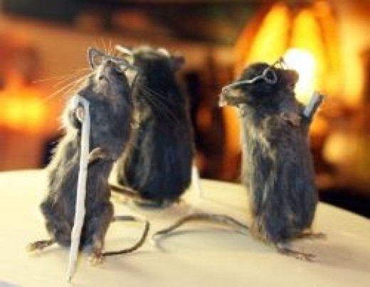 Taxidermy by Mammoth Curious on Etsy