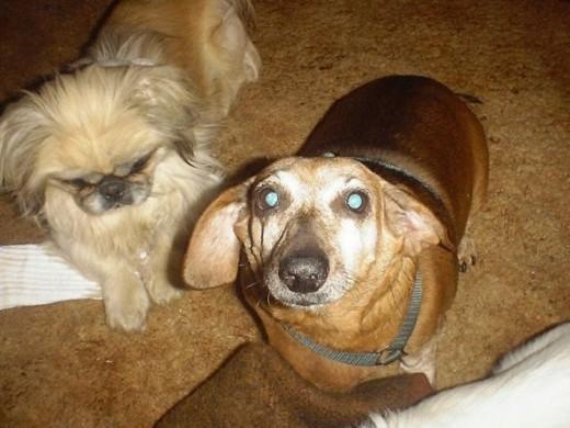 Sheeba and Angel Dog in Wynnewood, OK