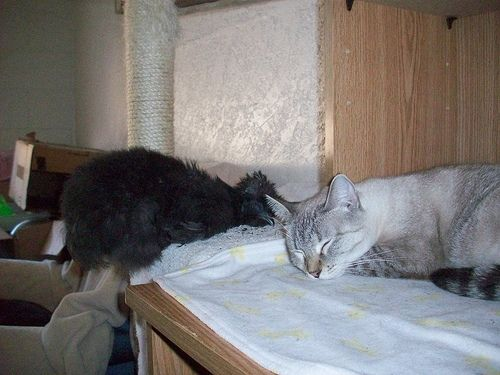 Chicken and Cat Sleeping Together