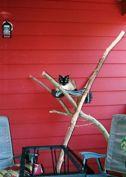 Picture of Siamese Cat on Handmade Cat Tree by OblivousOne