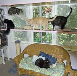 House Decorated for Cats by mi2starsfan