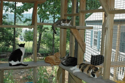 Fenced Cat Play Area