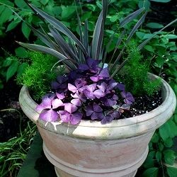 Beautifully potted plant