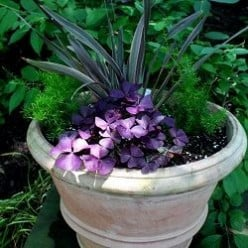 Refresh Your Container Garden