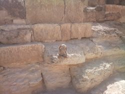 My son's teddy at the Great Pyramid in Giza.