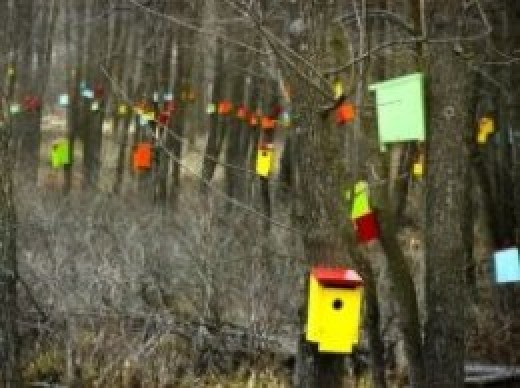 Bird House Forest in South Hero, VT