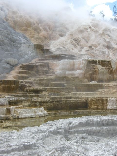 The Mammoth Hot Springs area