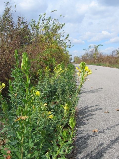An open section of the Nickel Plate Trail.