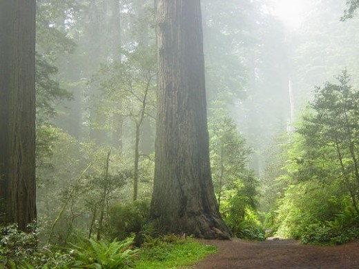 Redwood National Park is located in the far north-west section of California.