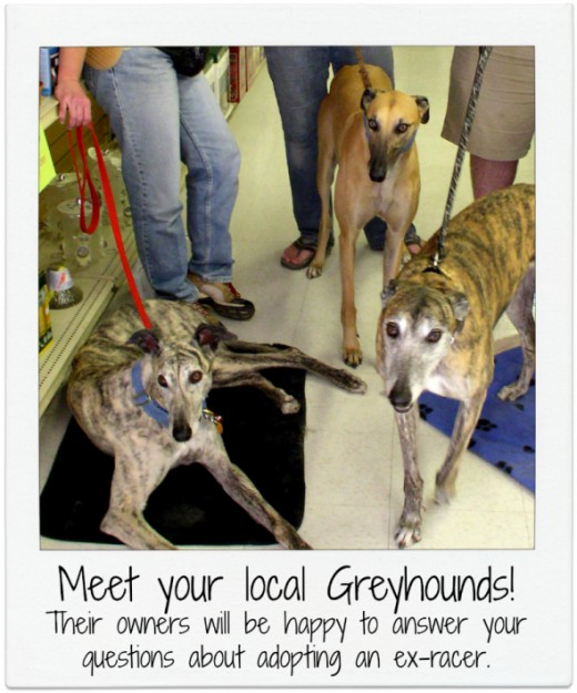 3 Greyhounds at Meet-and-Greet - Photo © Flycatcher