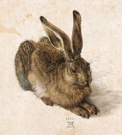Young Hare by Albrecht DÃurer (1471-1528)