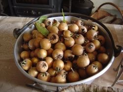 A bowl of medlars