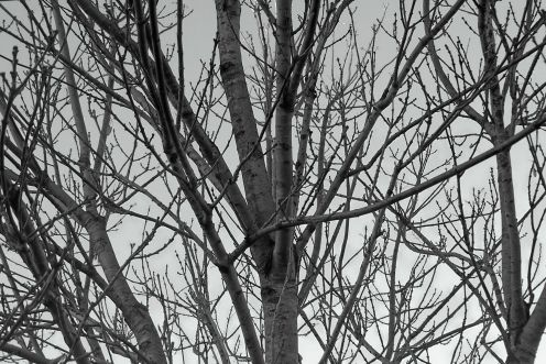 black and white photography trees. Black and white photography