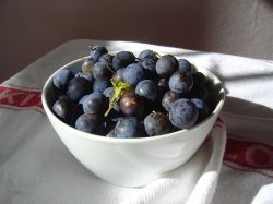 Sloes for Sloe and Apple Jelly