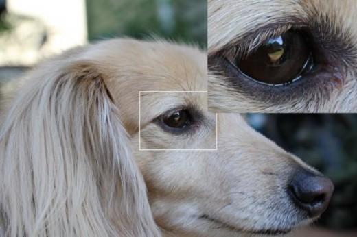 eye detail - Rebel 100D with kit lens
