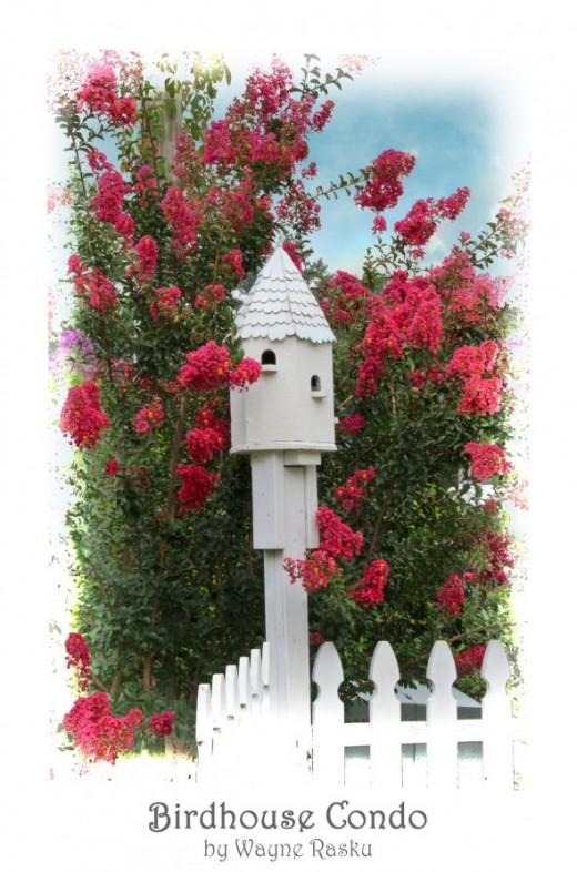 Birdhouse among Crepe Myrtle