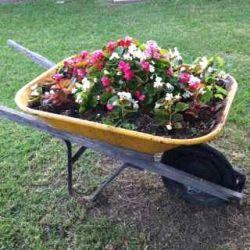 Beautiful wheelbarrow floral container garden from my friend Susan