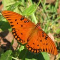Butterflies and Gardening to Attract Them
