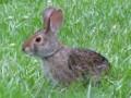 Sustainable Gardening a la Rabbit Hill