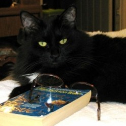 Best Gift Books for Cat Mystery Lovers