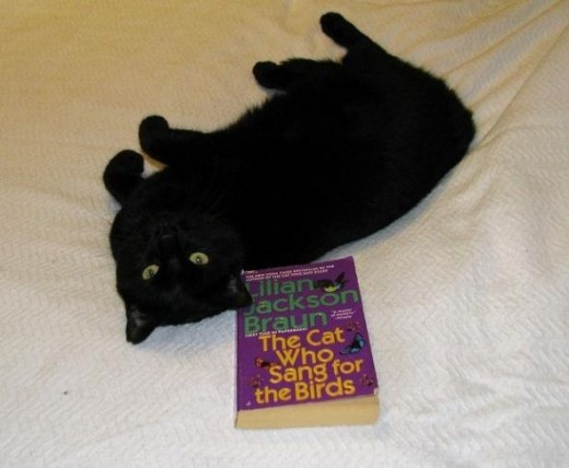 Pepper Cat likes Reading