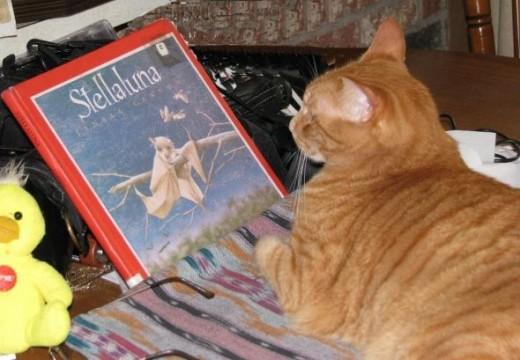 Dax Cat Reads